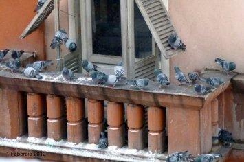 l'uccellino e l'immigrato danilo-amelotti.com