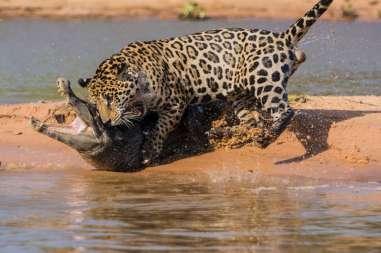 animali in lotta-danilo-amelotti.com